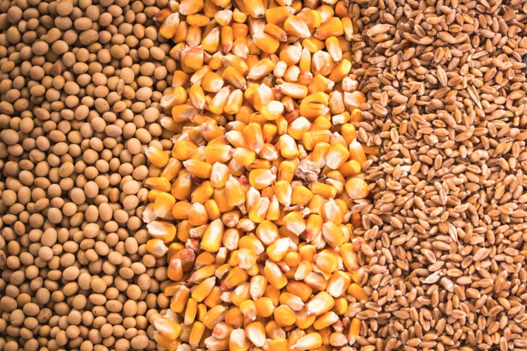 soybean corn wheat