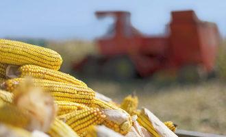 Corn adobestock 74243469 e 2