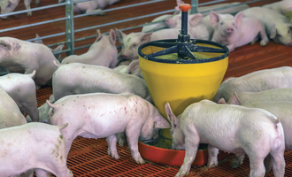 Factors impacting pellet quality pigs feb e