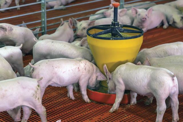 Factors impacting pellet quality pigs feb e