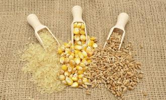 Rice corn wheat adobestock 94570967 e