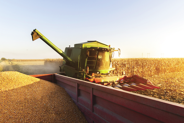 Shaping the future of european maize millers photo cred adobe stock e feb