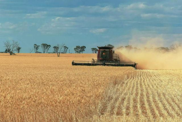 Wheat harvest 24 photo cred adobe stock e