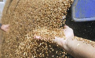 Wheat truck delivery photo cred adobestock e