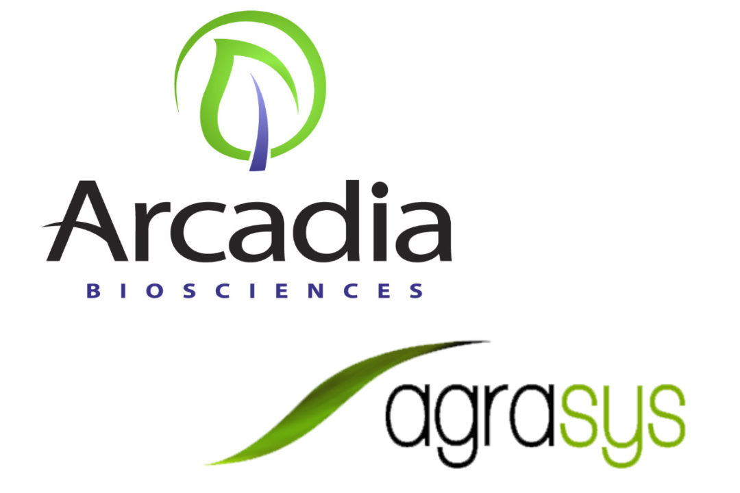 Arcadia Goodwheat