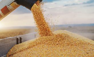 Corn adobestock 303800444 e