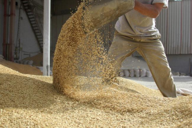 grain reserves