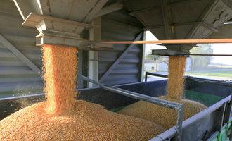 Loading grain in truck adobestock 101253771 e