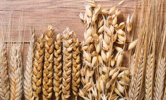 Wheat oats photo cred adobe stock e