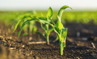 Corn field adobestock 180587891 e