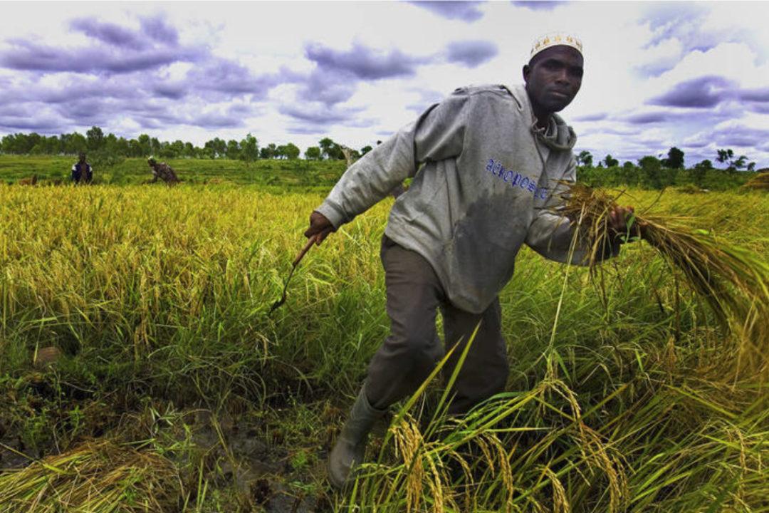 FAO_Africa_study.jpg