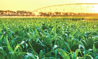 Corn field in sun photo cred adobe e