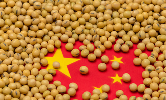 Soybean and china flag combo photo cred adobe stock e