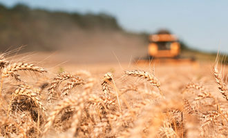 Wheat harvest 2 photo cred adobe stock e