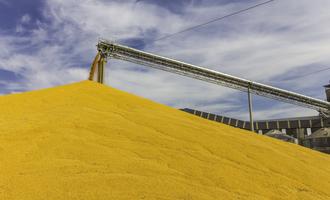 Grain pile adobestock 125239268 e