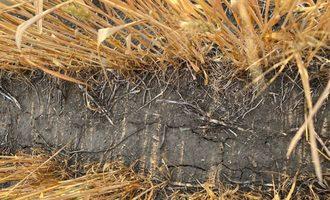 Nawg drought cracks in north dakota wheat crop summer 2021 photo cred nawg