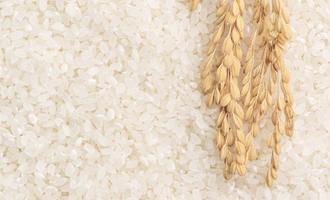 Rice adobestock 304062325 e