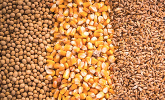 Soybeanscornwheat adobe stock e