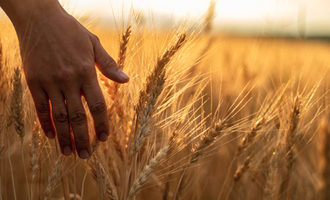 Wheat field photo cred adobe v'yacheslav partola e