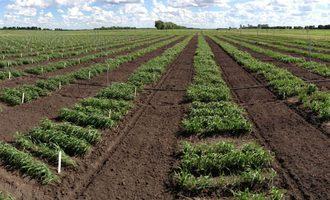 090121 wg canadianwheat lead