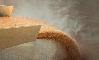 Wheat pour photo cred adobe stock e