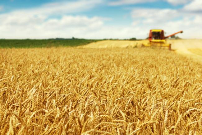 US wheat seeding 2021