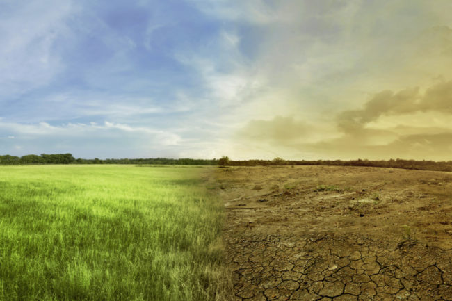 Climate change concept, healthy land next to unhealthy land