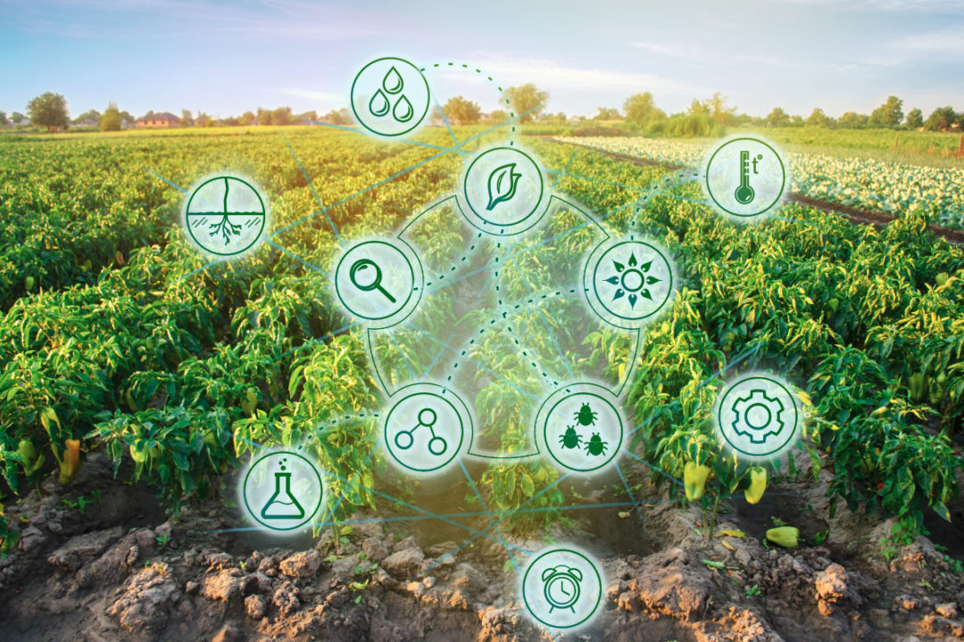Agritech concept, crops with digital tools