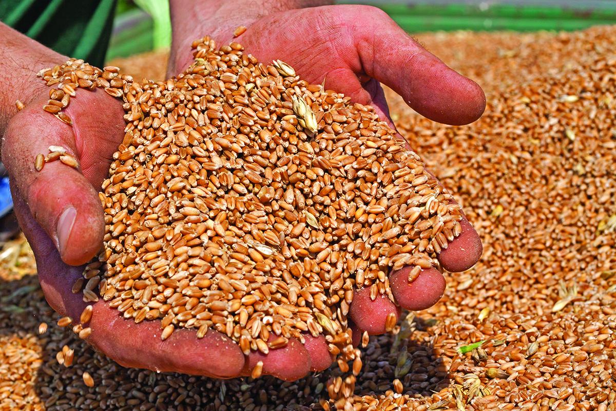 Ukraine grain export