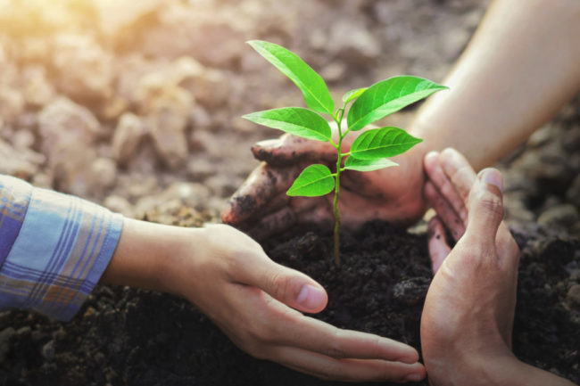 Sustainability concept, hands wrapped around a plant