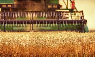 China wheat