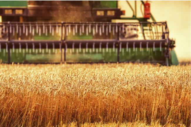 China-wheat.jpg