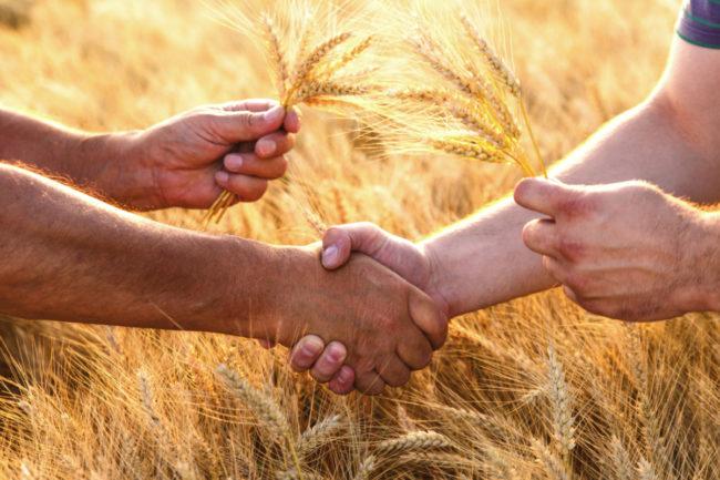 Wheat-handshake-2_AdobeStock_145984303_E.jpg