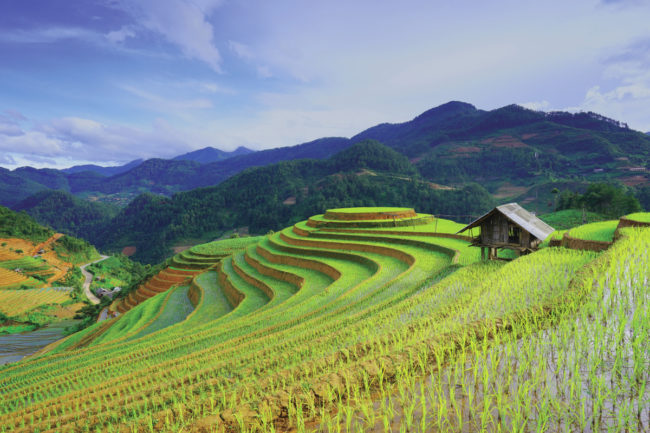 rice-field_AdobeStock_101967622_E-2.jpg