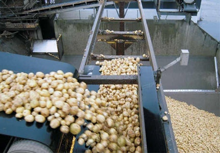 potato processing for starch