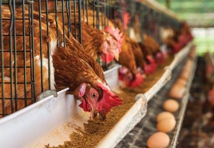 Wayne Farms CEO to step down | World-grain com | January 30