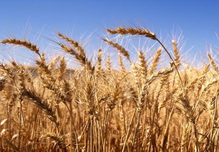 Canada focuses on strengthening trade ties | World-grain com