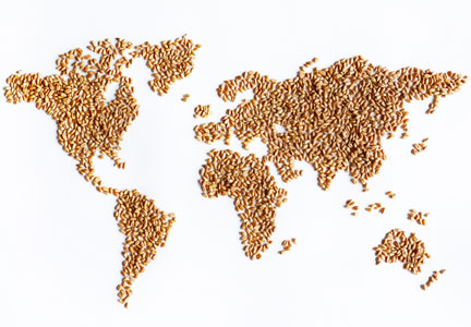 world wheat map